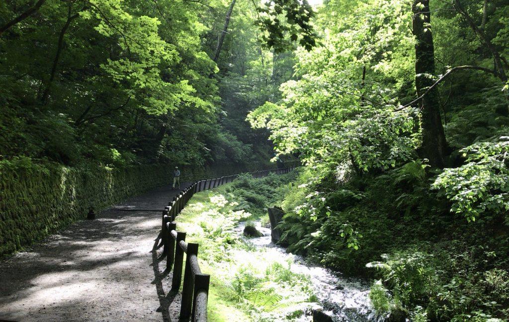白糸の滝への道