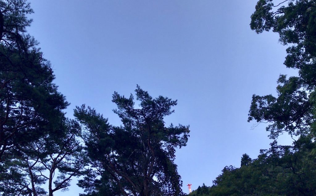碧血碑前からの空