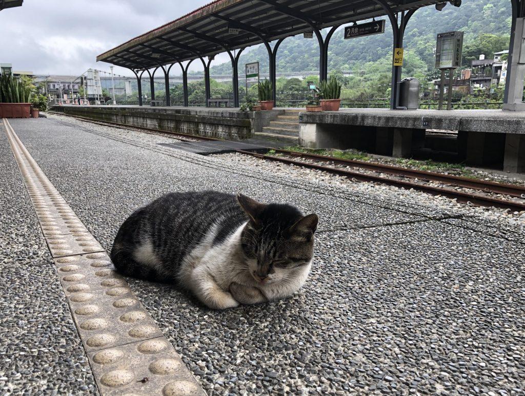 十分駅の猫